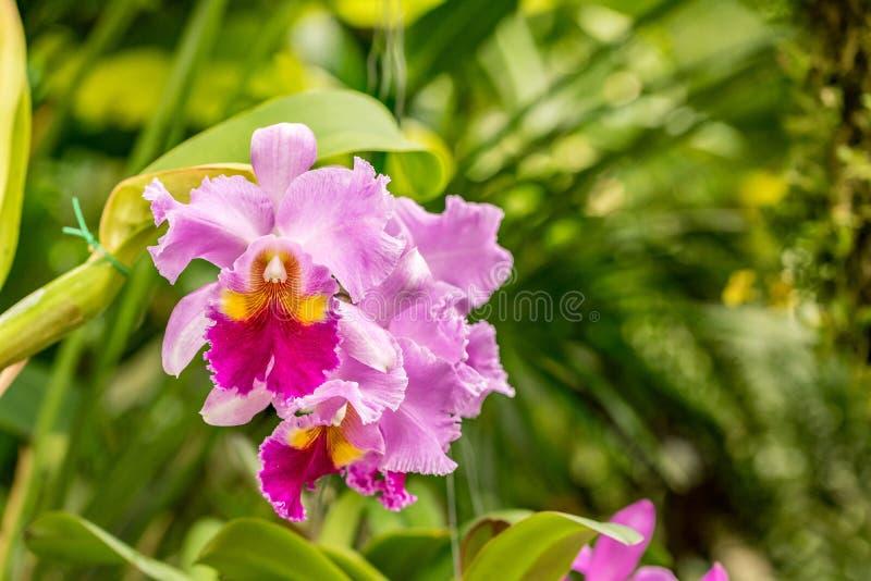 Roze orchideeën bij zonneschijn stock afbeelding