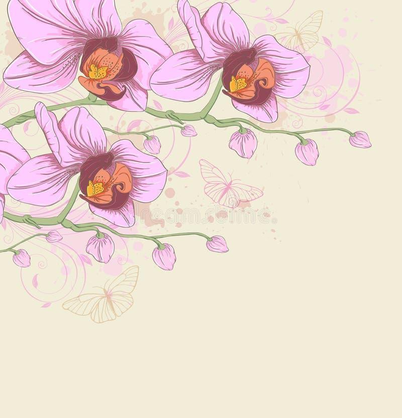 Roze orchideeën en vlinders royalty-vrije illustratie