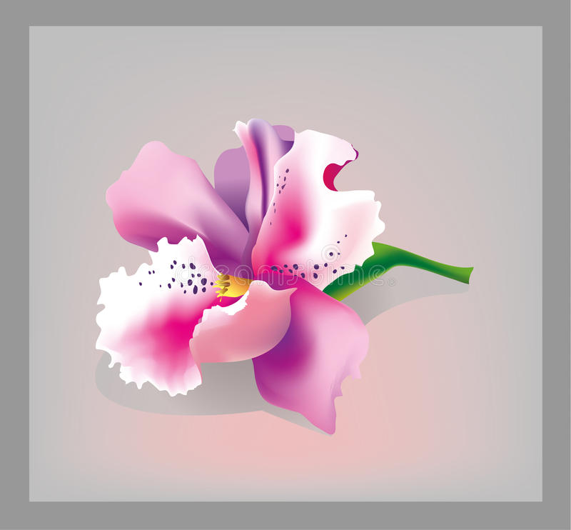 Roze Orchidee stock illustratie