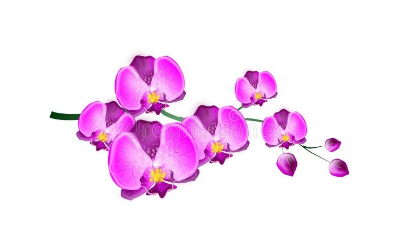 Roze Orchidee vector illustratie