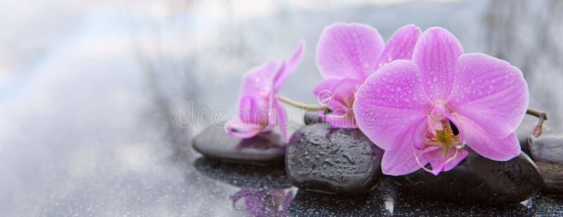 Roze orchidee en basaltstenen op de zwarte achtergrond stock fotografie