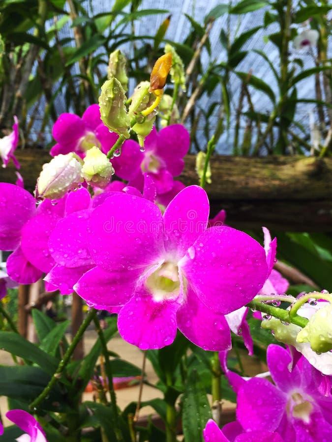 Roze orchidee en schoonheidsachtergrond stock foto's