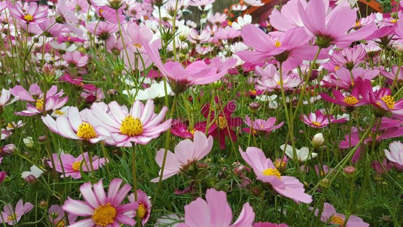 Roze Overzees royalty-vrije stock afbeelding