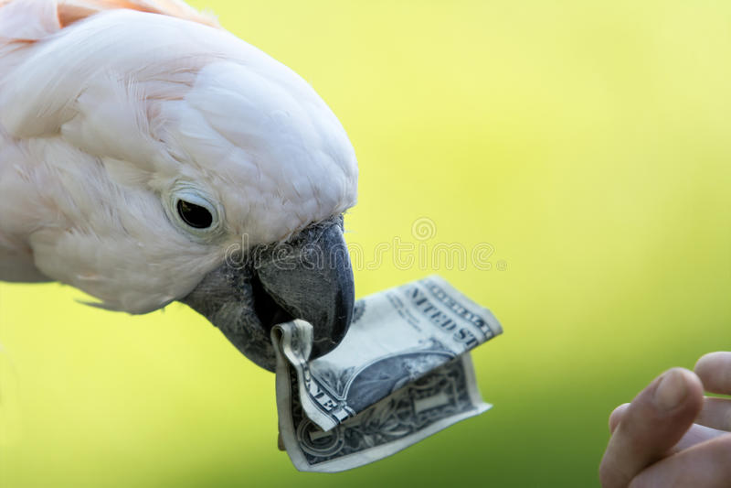 Roze Papegaai royalty-vrije stock foto