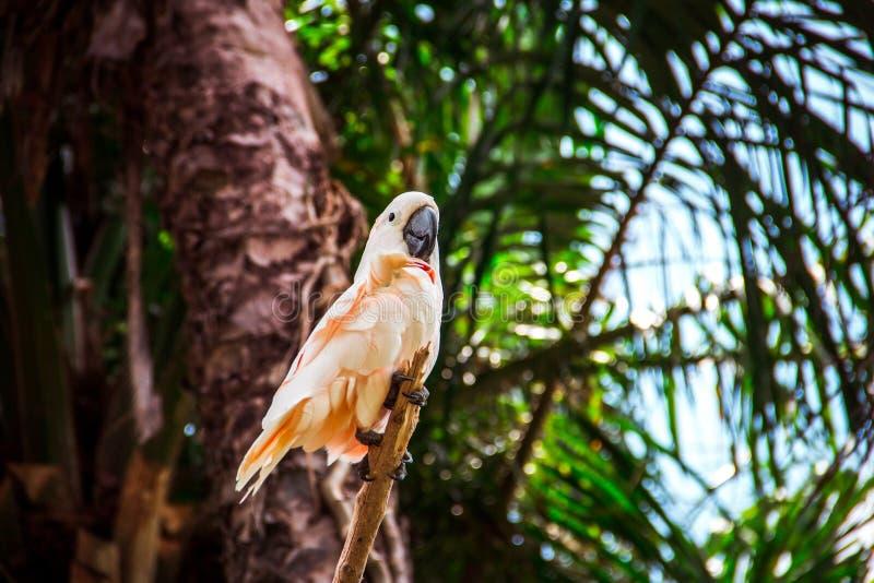 Roze papegaai in tropisch bos stock afbeelding