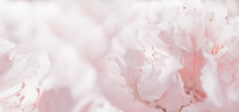 Roze pastelkleur bloemen romantische achtergrond en bokeh royalty-vrije stock foto
