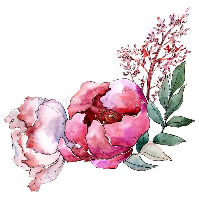 Roze pioenbloemen met groene bladeren Het geïsoleerde element van de boeketillustratie Waterverf achtergrondillustratiereeks stock illustratie