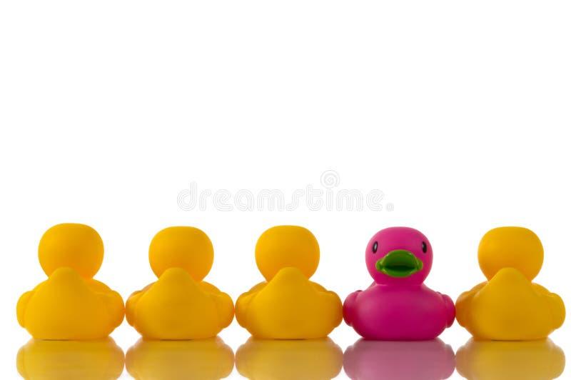 Roze, purpere rubbereend met gele eenden