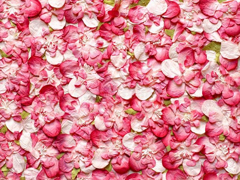 Roze Rose Petals Paper royalty-vrije stock afbeelding