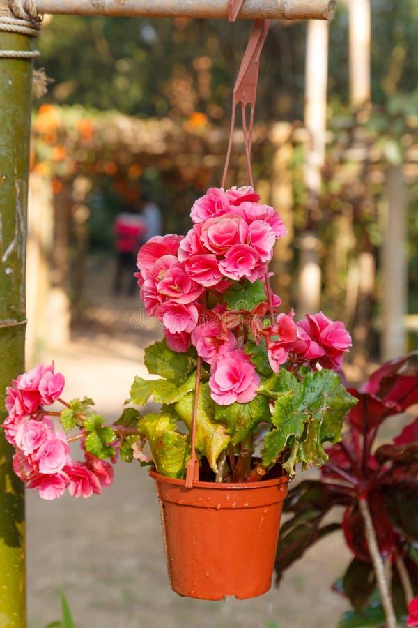 Roze roze-4 royalty-vrije stock foto