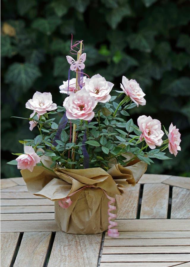 Roze rozen in een het verfraaien bloempot op een lijst buiten royalty-vrije stock fotografie