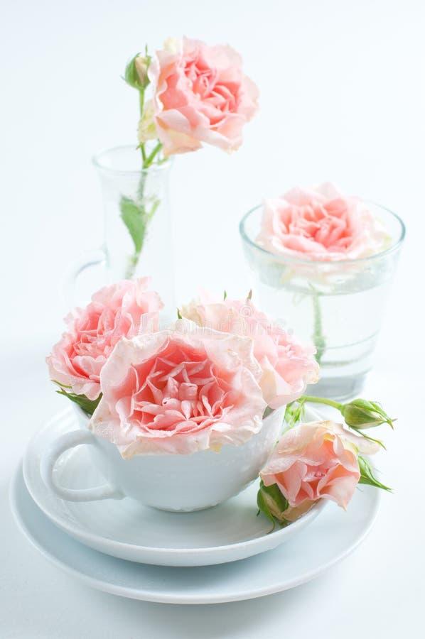 Roze rozen in een witte kop stock afbeeldingen