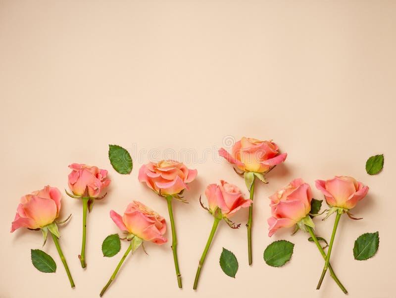 Roze rozen op beige achtergrond royalty-vrije stock fotografie