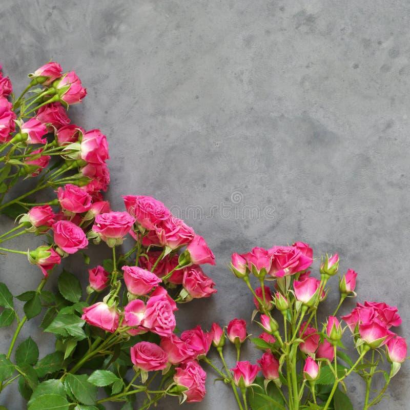 Roze rozen op grijs royalty-vrije stock foto's