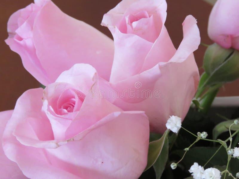 Roze rozen voor de de Dagdame van Valentine stock afbeelding