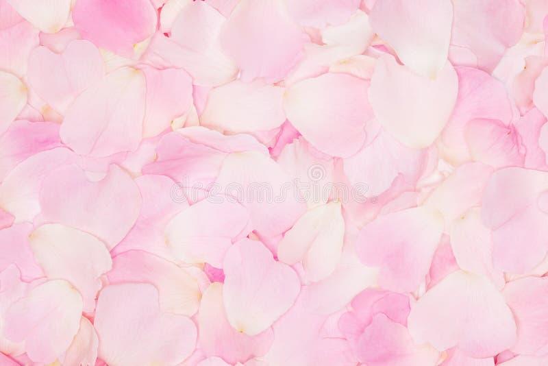 Roze teder nam bloemblaadjesachtergrond toe royalty-vrije stock afbeelding