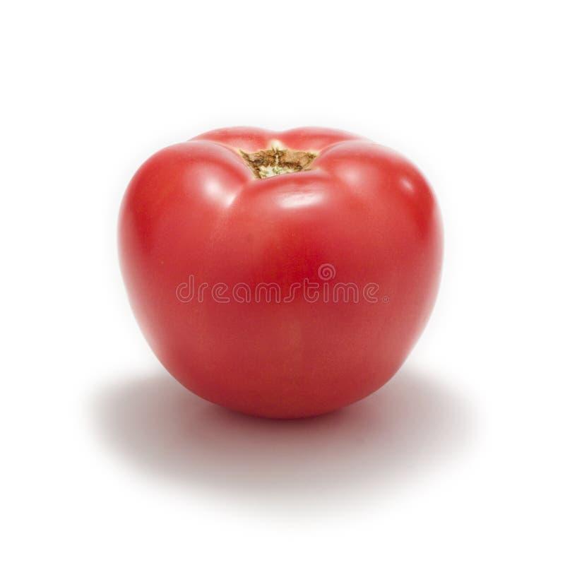 Roze tomaat royalty-vrije stock afbeelding