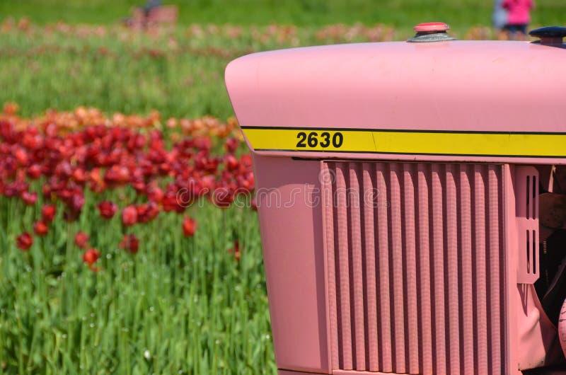 Roze Tractor bij Houten Schoen Tulip Farm royalty-vrije stock foto's