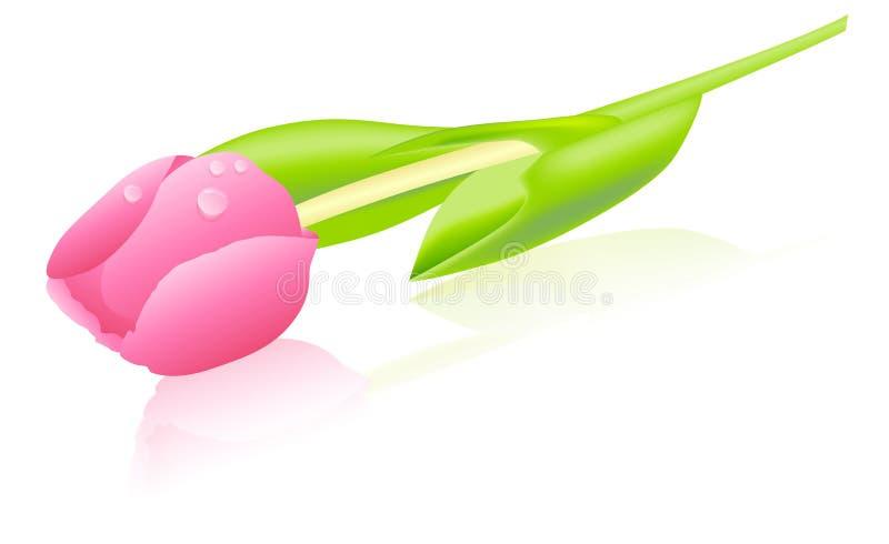 Roze Tulp vector illustratie