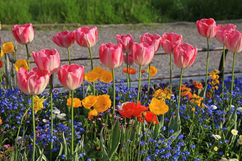 Roze tulpen en multicolored tuinbloemen royalty-vrije stock afbeeldingen