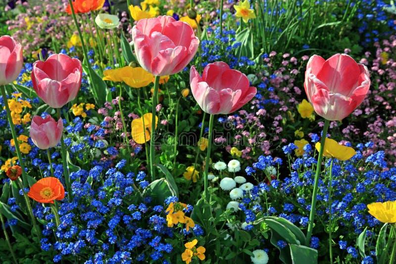 Roze tulpen en multicolored tuinbloemen royalty-vrije stock foto