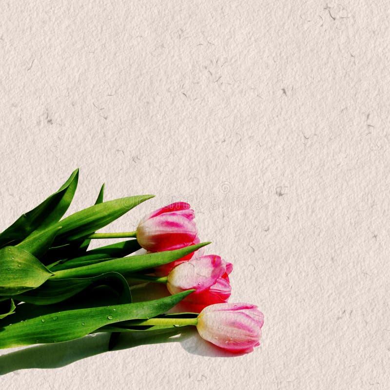 Roze Tulpen op papier stock fotografie