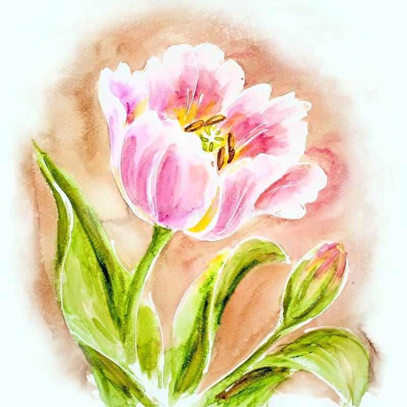 Roze tulpen, waterverf het schilderen. royalty-vrije illustratie