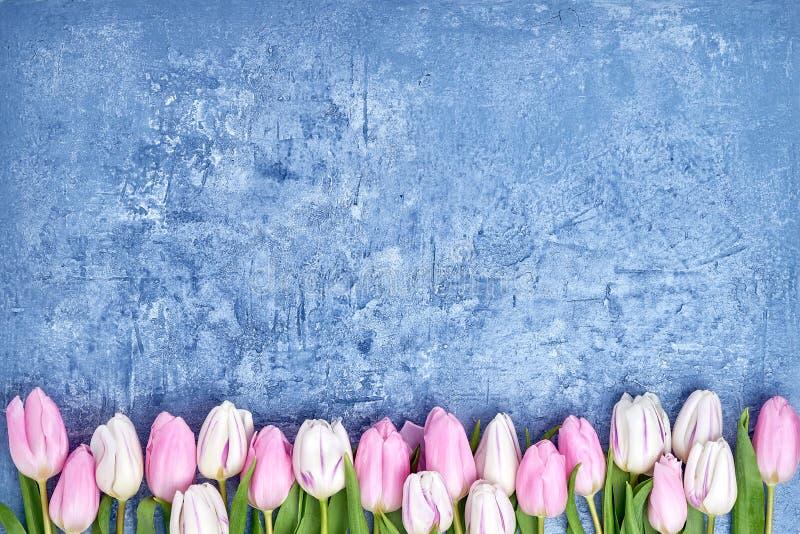 Roze tulpengrens op blauwe achtergrond De ruimte van het exemplaar royalty-vrije stock afbeeldingen