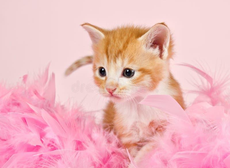 Roze veren die een ginderkatje omringen stock afbeeldingen