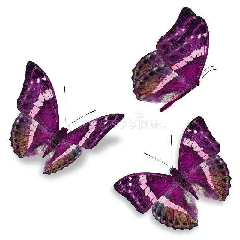 Roze vlinder drie royalty-vrije stock fotografie
