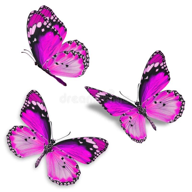Roze vlinder drie royalty-vrije stock afbeelding