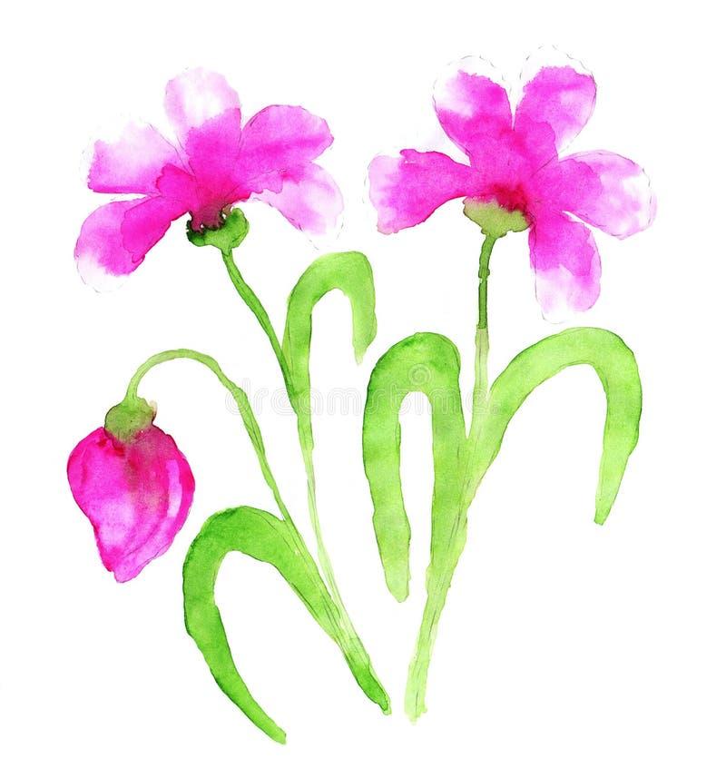 Roze waterverfbloemen Stilized nam of pion toe, of de hond nam bloem toe stock afbeeldingen