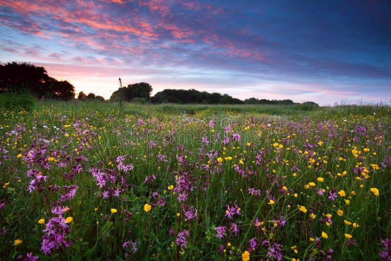 Roze wildflowers bij zonsondergang stock fotografie