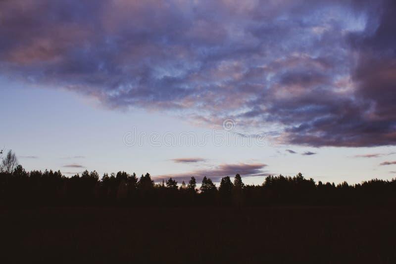 Roze zonsondergang op de achtergrond van het silhouet van de bos Lilac wolken in de hemel bij schemer Mooi Landschap stock fotografie