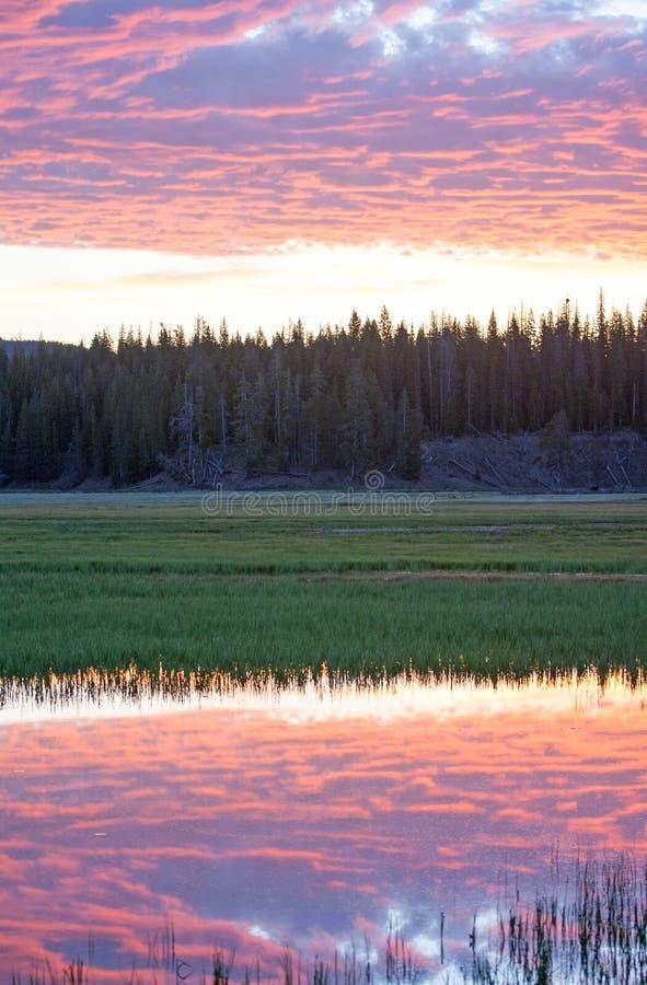 Roze Zonsopgang cloudscape over Pelikaankreek in het Nationale Park van Yellowstone in Wyoming royalty-vrije stock afbeeldingen