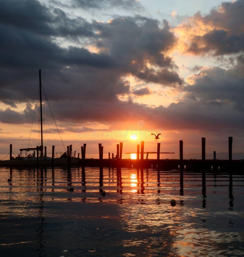 Roze zonsopgang die het strand met een vogel overdenkt die en dok het nadenken vliegt stock afbeeldingen
