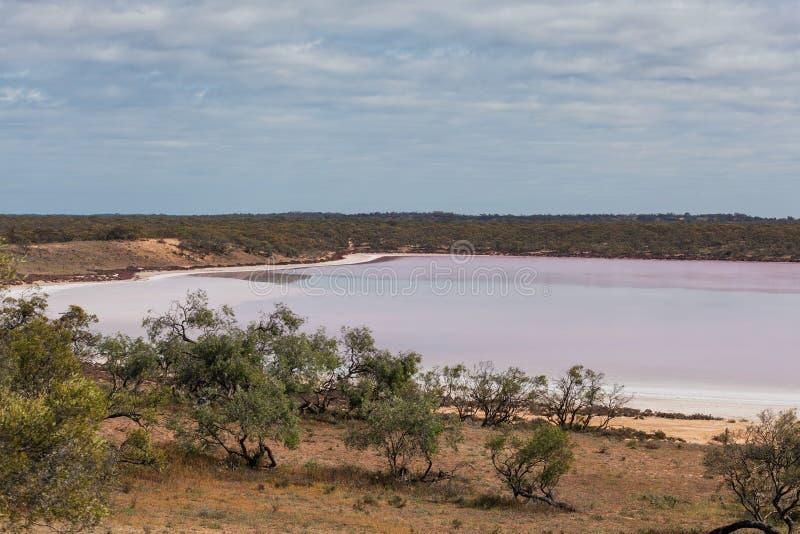 Roze zout meer Becking onder inheemse Australische vegetatie stock foto