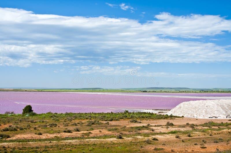 Roze zout moeras stock afbeeldingen