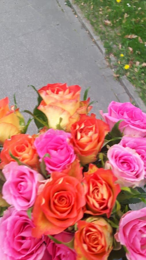 rozen royalty-vrije stock afbeelding