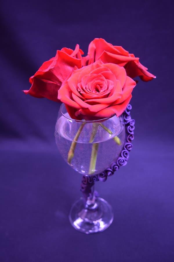 Rozen in een roze glas stock afbeeldingen