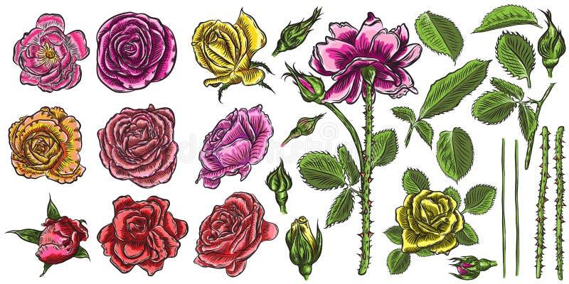 Rozen geplaatst aannemer Bloeminzameling DIY Wilde bloemenmengeling F stock illustratie