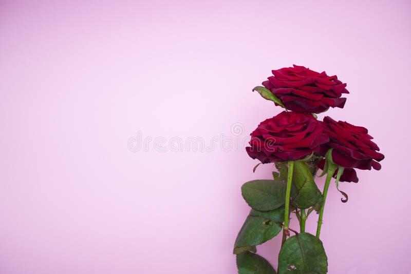 Rozen op een roze achtergrond, een boeket van rode rozen De Dag van Valentine, Gelukkige Moederdag Gelukkige Vrouwen` s Dag Exemp royalty-vrije stock afbeeldingen