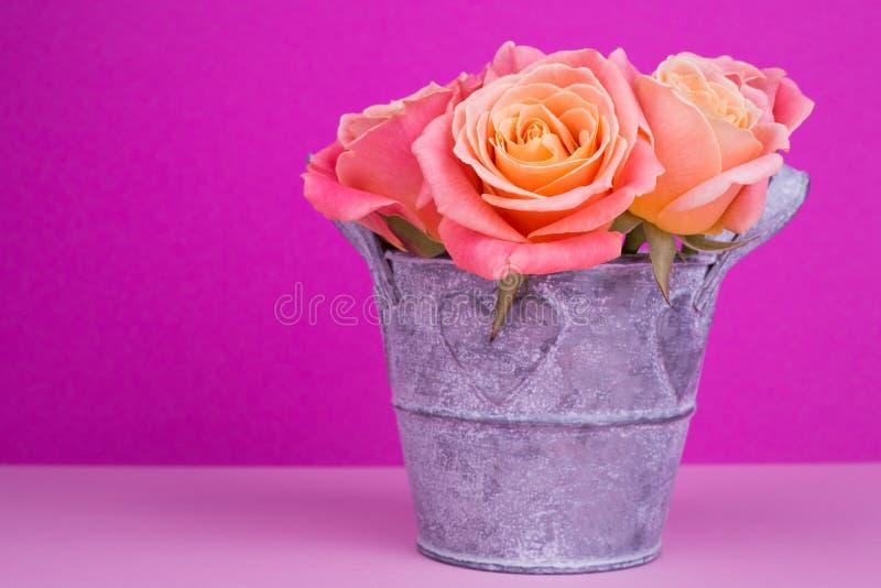 Rozen in pot op roze achtergrond stock fotografie