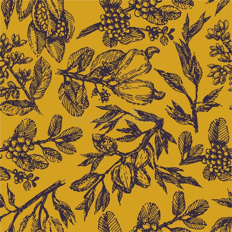 Rozgałęzia się z pistacjowymi dokrętkami, kakaowymi fasolami, migdałami, nerkodrzew dokrętkami i kawowych fasoli rośliny ręki rem royalty ilustracja