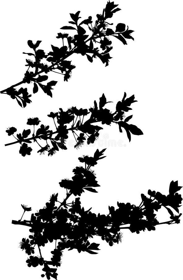 rozgałęzia się czereśniowego inkasowego drzewa ilustracja wektor
