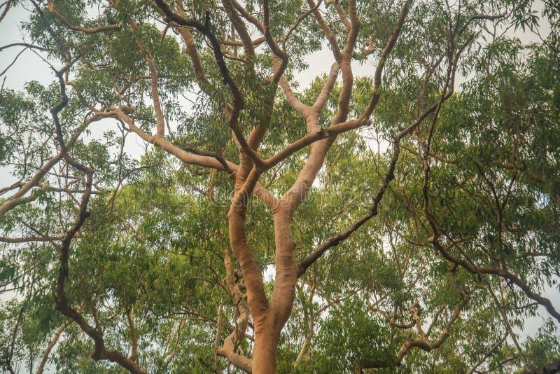rozgałęzia się drzewa zdjęcie royalty free