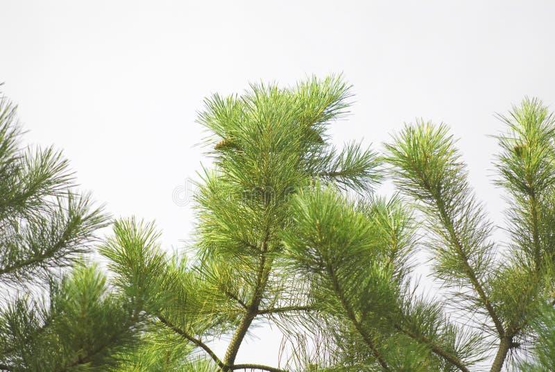 rozgałęzia się drzewa obrazy stock