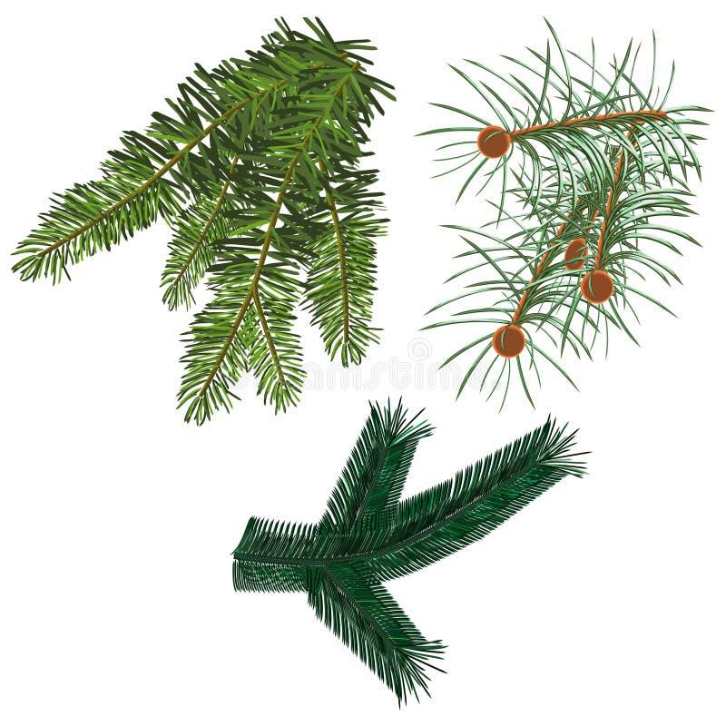 rozgałęzia się futerkowego drzewa royalty ilustracja