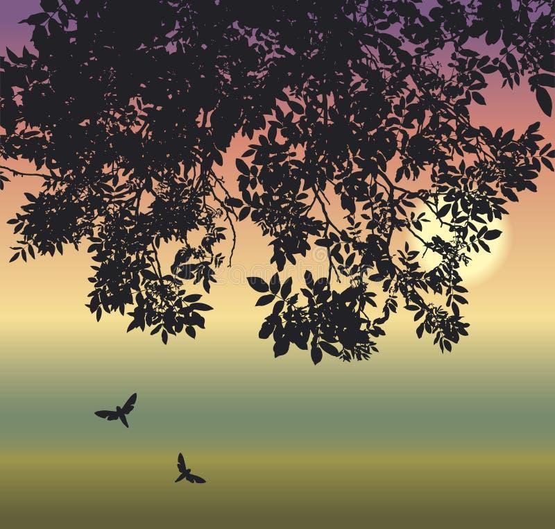 rozgałęzia się motyla ilustracji