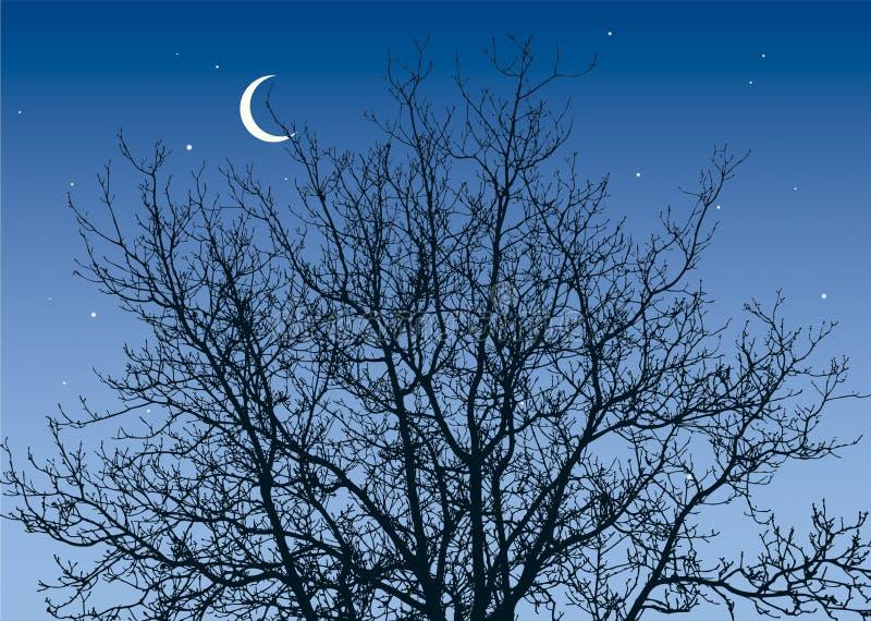 rozgałęzia się nocne niebo ilustracja wektor